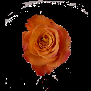 Orange ros - välj antal till buketten hos Interflora.